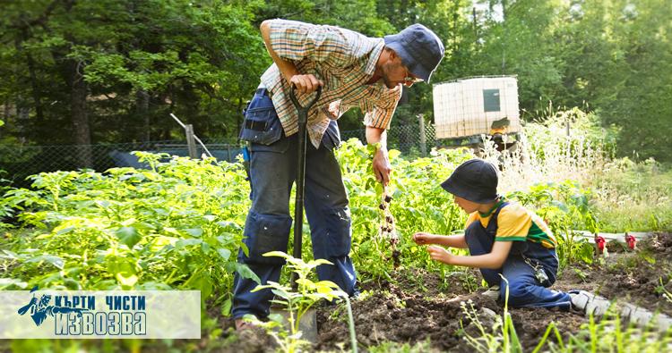 Етапи за поддръжка на градина